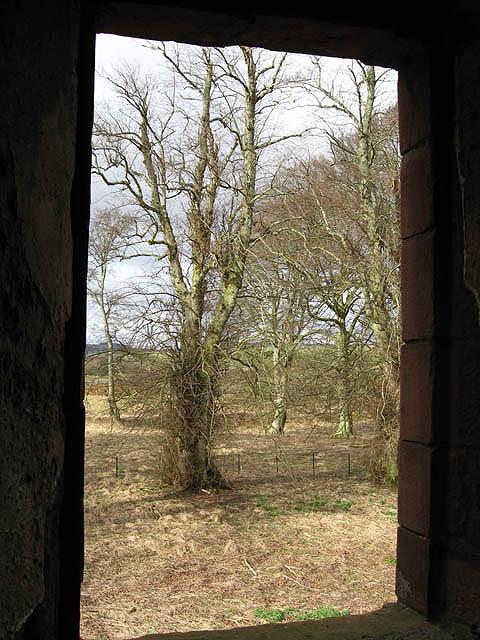 Trees at Greenknowe Tower