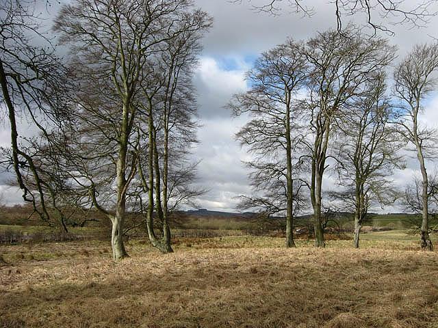 Trees by Greenknowe Tower