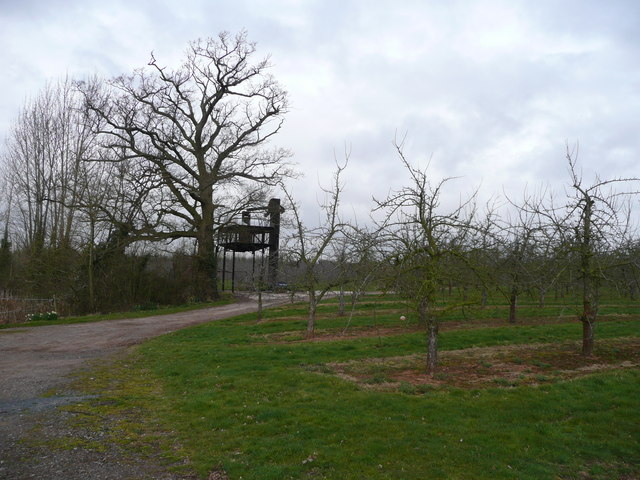 Edge of the cider orchard