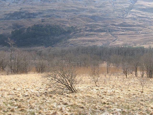Boggy woodland, Elleric