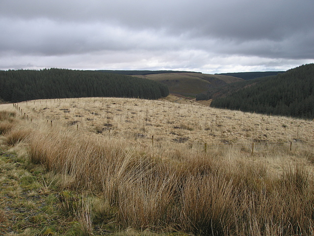 New plantation in Tywi Forest