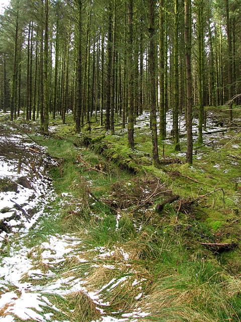 Dolgoch forest