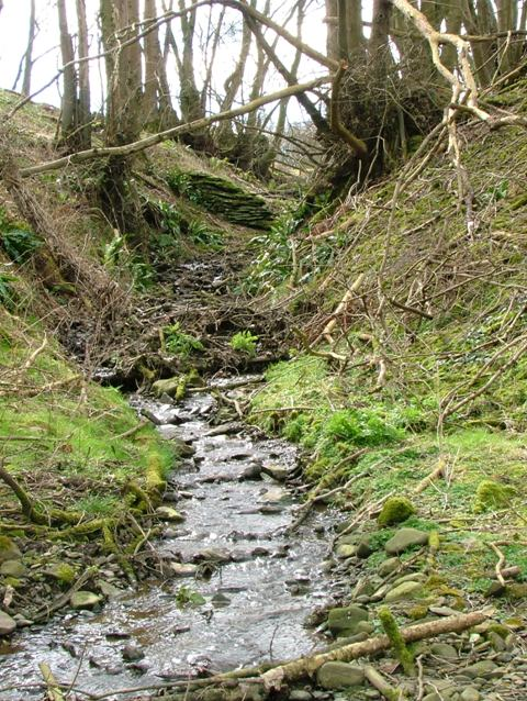 Small Stream, Cruggleton Woods