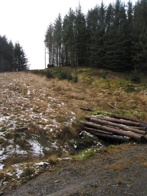 A small clearing in Dolgoch forest