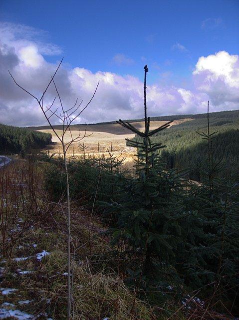 Upper Cwm Hirnant