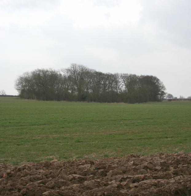 Copston Spinney