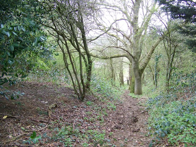 Bridleway near Rockbourne