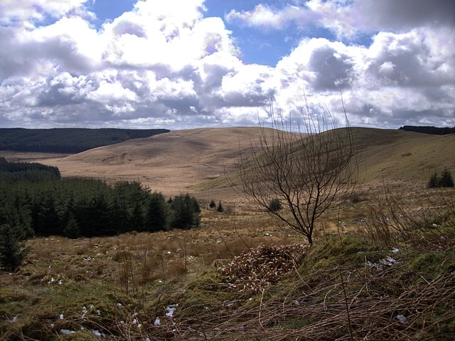 Edge of Tywi Fechan forest