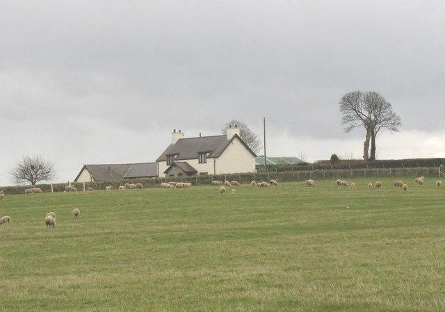 Tyddyn Hen viewed across sheep pasture