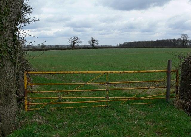 Field near Norton-Juxta-Twycross