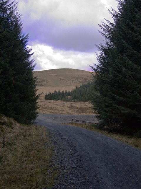 Forest track linking Tywi Fechan and Moel Prysgau forests