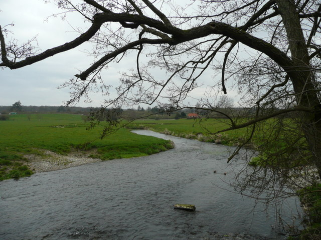 River Wey - downstream