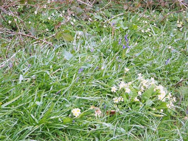 Spring Flowers,  Manor Farm
