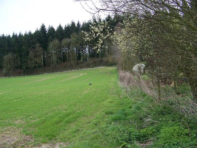 Field beside Drove Barn