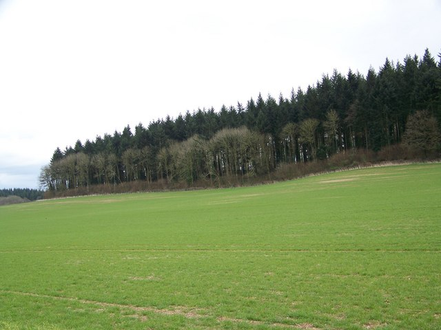 Rockstead Copse, Manor Farm
