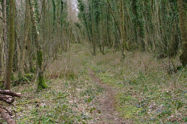Track Through Shore Wood Belts