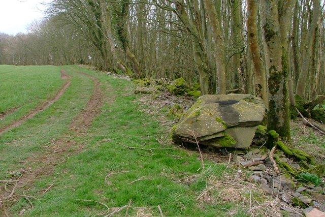 Track Along Edge of Shore Wood