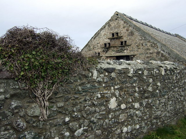 Ivy and dovecote at Rhosson Ganol