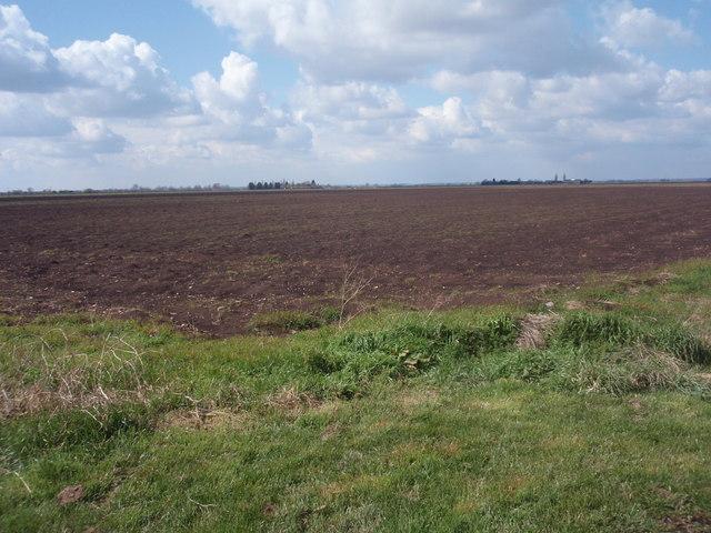 Fenland farmland