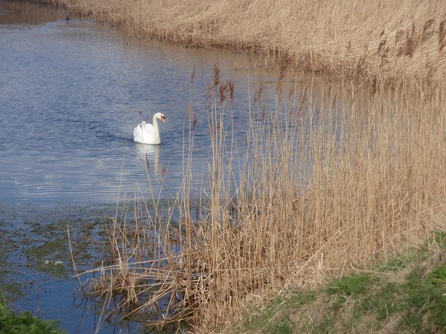 Pond on Halfway Farm