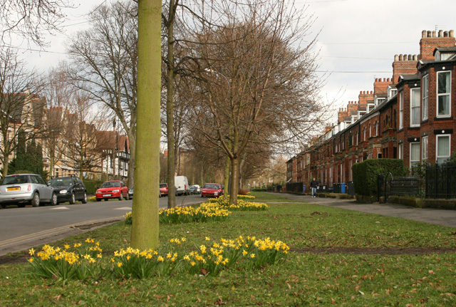 Westbourne Avenue, Hull, in spring