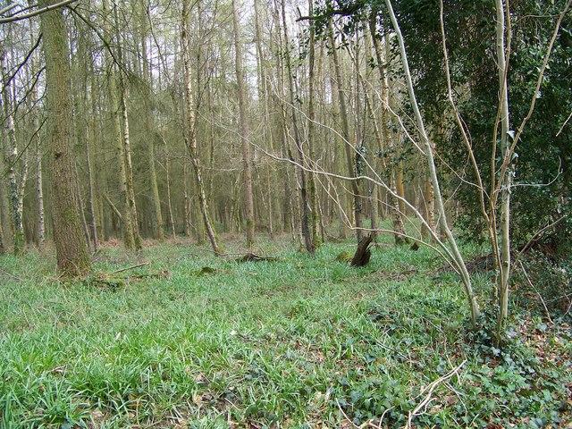 Radnall Wood