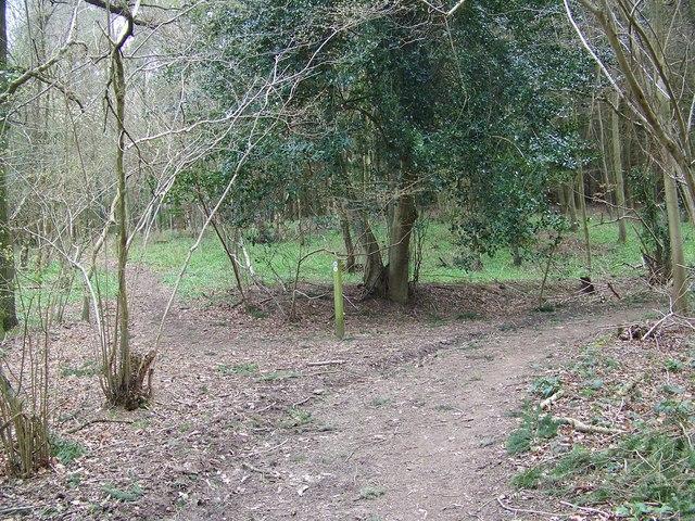 Junction, Radnall Wood