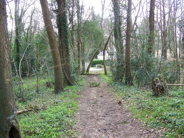 Bridleway, Radnall Wood