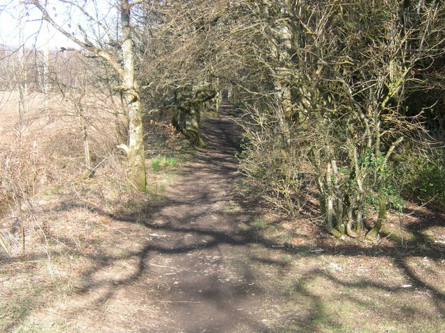 Start of Woodland path towards Muirend Farm