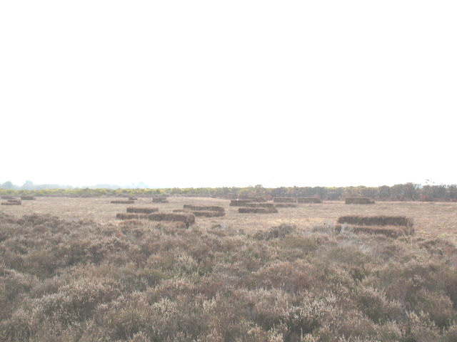 Ling bales on Goatspen Plain