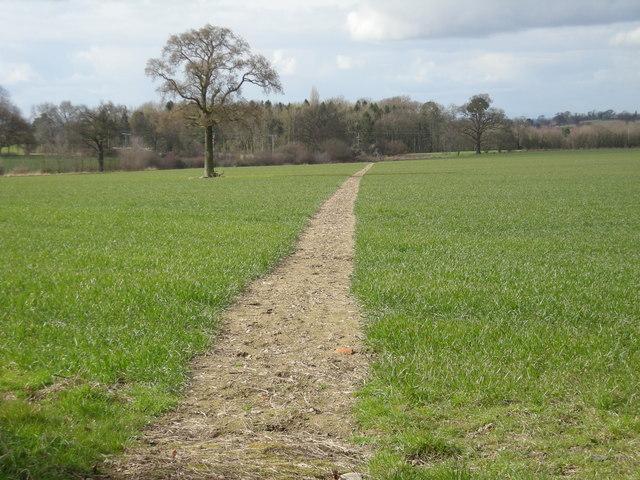 Footpath across a field of Barley