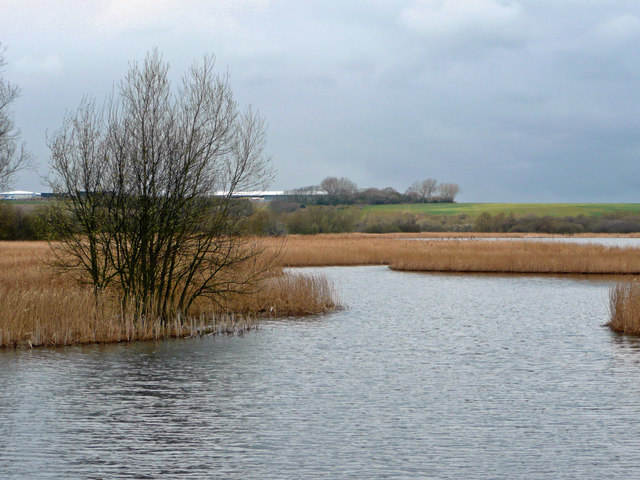 View north from the reedbed hide