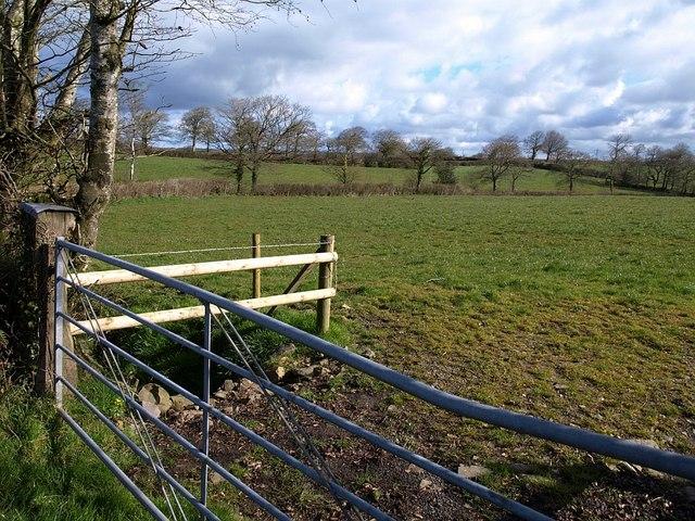 Field near Paddon