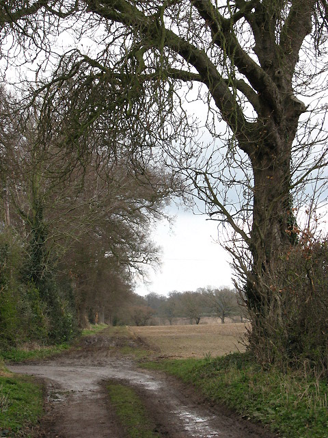 Footpath to Ivy Farm