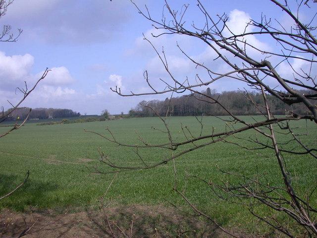 Wheatfield & Woods seen from Hinton Way