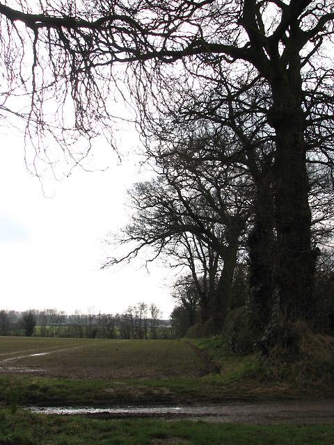 View SW across footpath