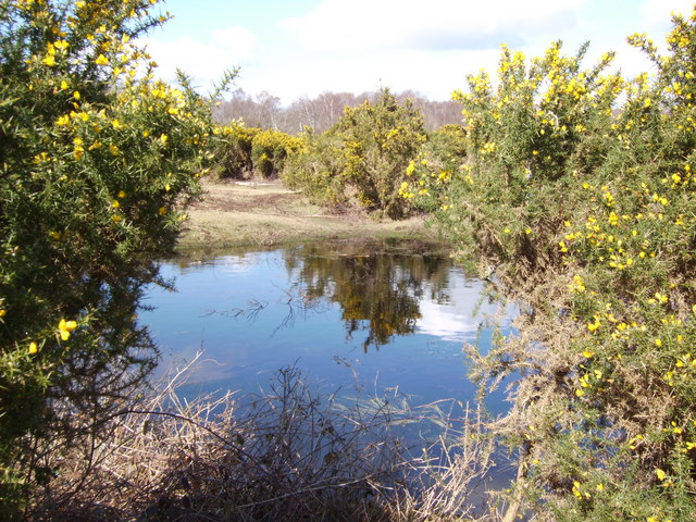 Small pond in New Forest