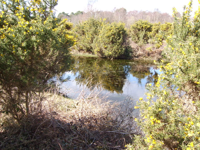 Pond in New Forest