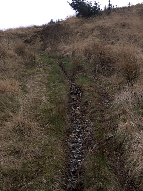 Path leading into Dolgoch forest
