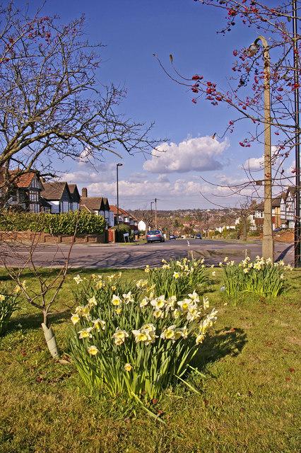 Spring planting, Prince George Avenue, London N14