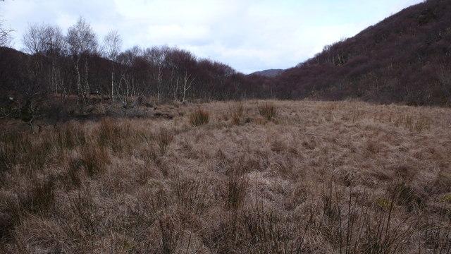 Birchwood clearing