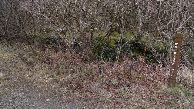 Marker post for woodland walk