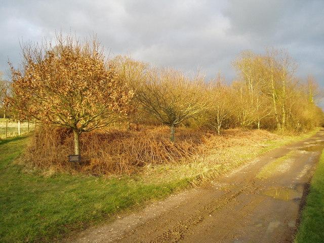 Oaks on Grub Ride, Clapham