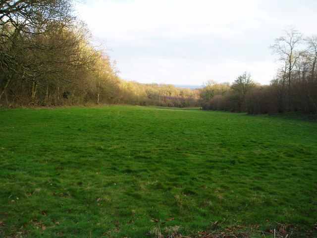 Open space in Clapham Wood