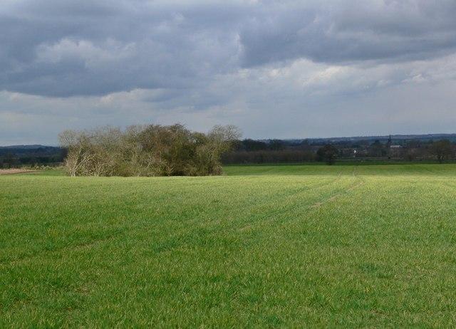 Farmland north of Norton-Juxta-Twycross