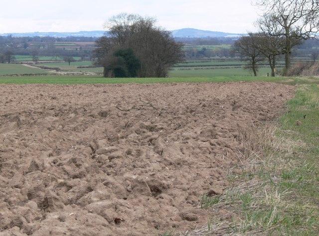 Ploughed field north of Norton-Juxta-Twycross