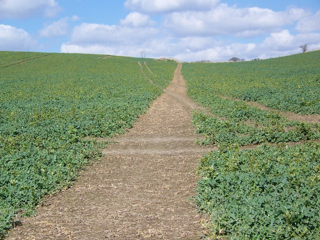Clearly defined footpath, Tisbury