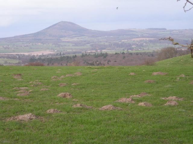 Mountain & Molehills