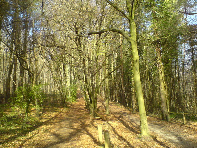 Bridle path in Cuckoo Wood