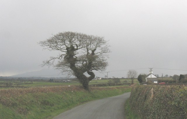 Country lane near Bryn Cottages